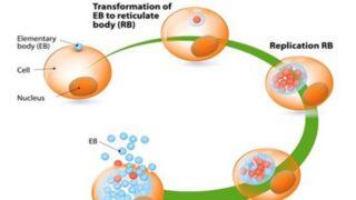 Infección por clamidia: síntomas, causas y tratamientos