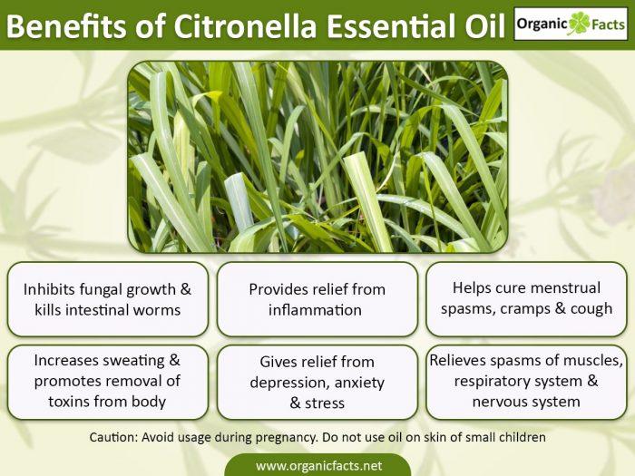 citronellassential oilinfo