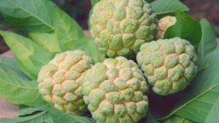 7 Surprising Benefits of Custard Apple (Sugar-Apple)