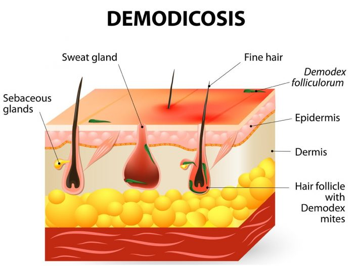 demodicosis