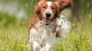 Probiotics for Dogs: Are they Safe