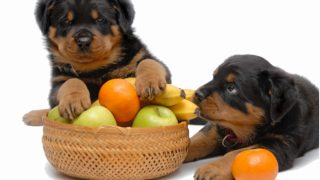 14 Healthiest Vegetables & Fruits For Dogs