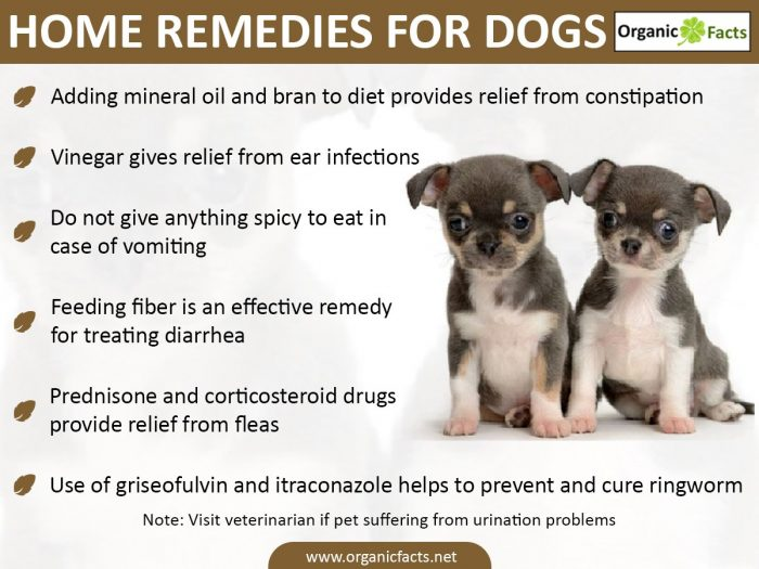 Canine herbal therapy - These Are Just Some Of The Remedies That You Can Follow In Case Your Pet Is Suffering From The Above Disorders As A Precaution You Must Use A Diet Chart