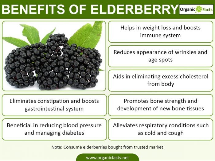 elderberriesinfo