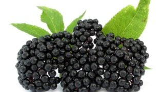 Health Benefits of Elderberries