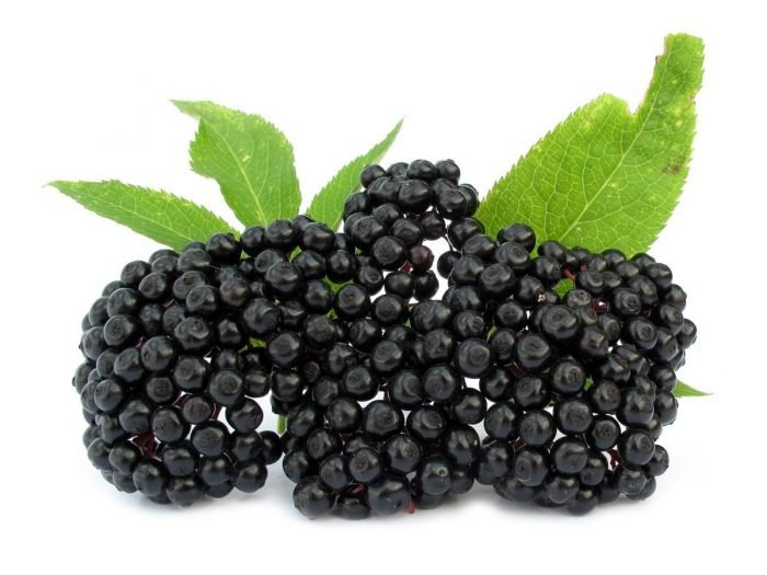 Image result for elderberries