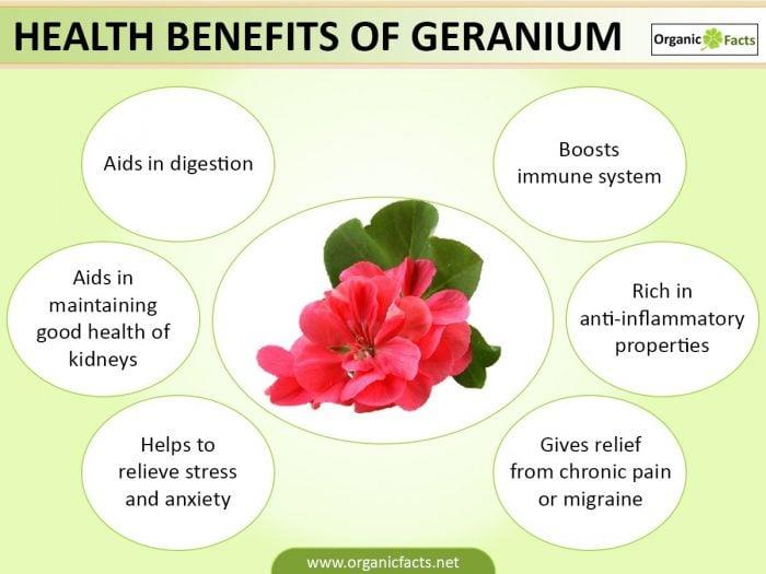geraniuminfo