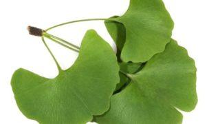 Ginkgo Biloba Tea: Benefits & How to Make