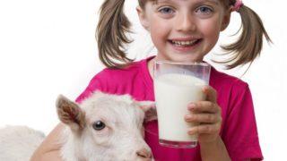 9 Increíbles beneficios de la leche de cabra