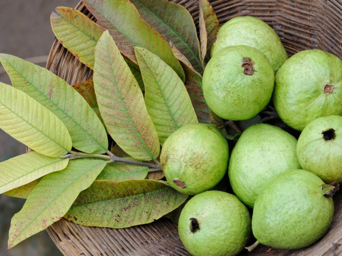 Guavas and guava leaves in a basket