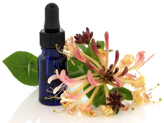 Benefits of white flower oil image collections flower decoration ideas benefits of white flower oil choice image flower decoration ideas white flower essential oil choice image mightylinksfo