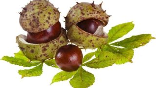 7 Best Benefits of Chestnuts