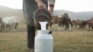 Horse Milk (Mare Milk): Nutrition & Benefits