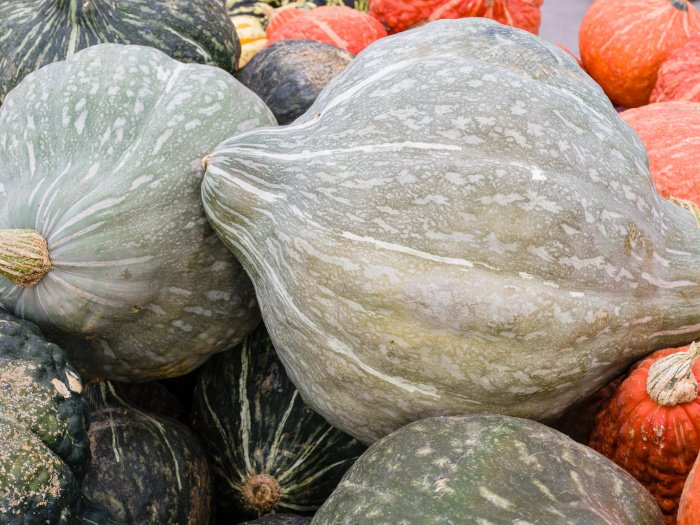 Hubbard Squash: How To Store, Cut, & Cook