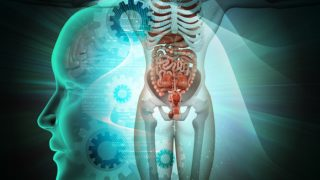 Top 4 Internal Organs You Should Pay Attention to