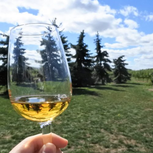 Close up of ice wine in a wine glass held outdoors