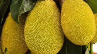 Jackfruit: 12 Surprising Benefits & Nutrition Facts