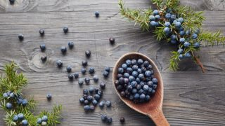 5 Amazing Juniper Berry Substitutes