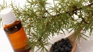 13 Incredible Benefits of Juniper Essential Oil