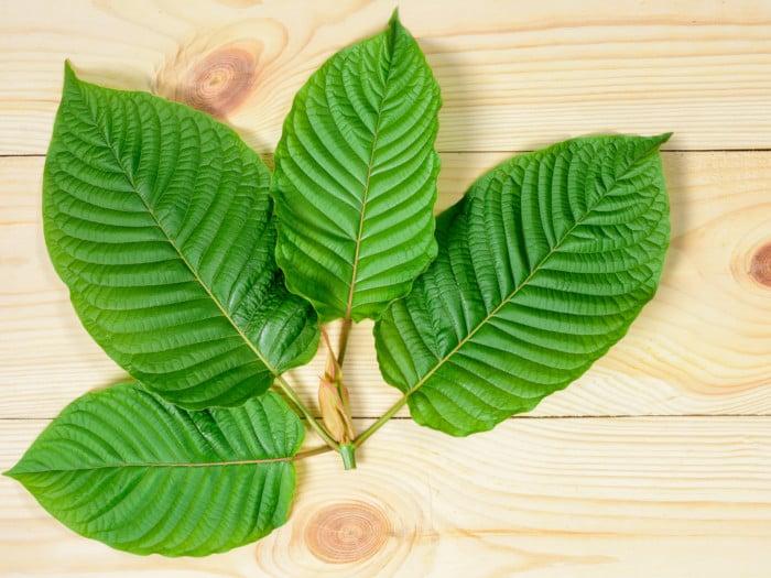 8 Impressive Benefits of Kratom Leaves | Organic Facts