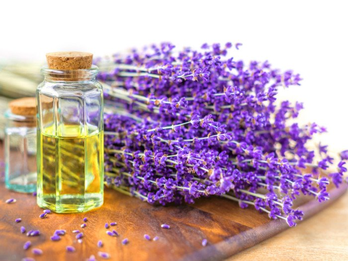 Lavender oil with lavender plants on a wooden tray with white background