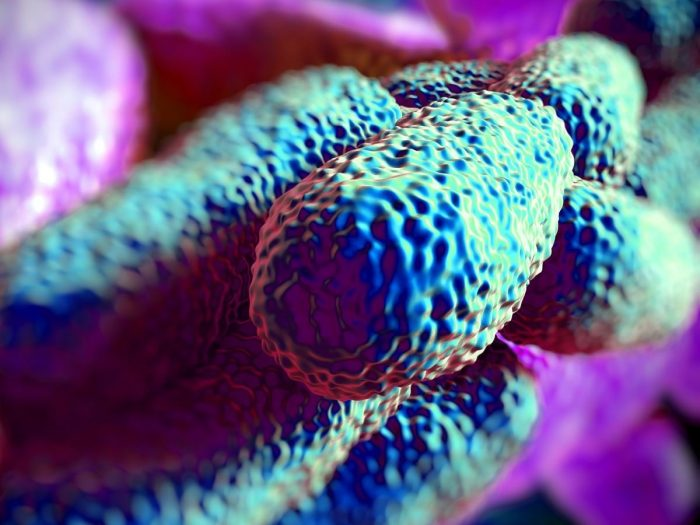 legionellabacteria