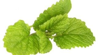 Lemon Balm: Benefits, Uses & Side Effects