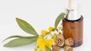 Lemon Eucalyptus Essential Oil- Benefits & Uses