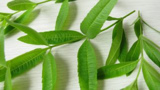 9 Amazing Benefits of Lemon Verbena