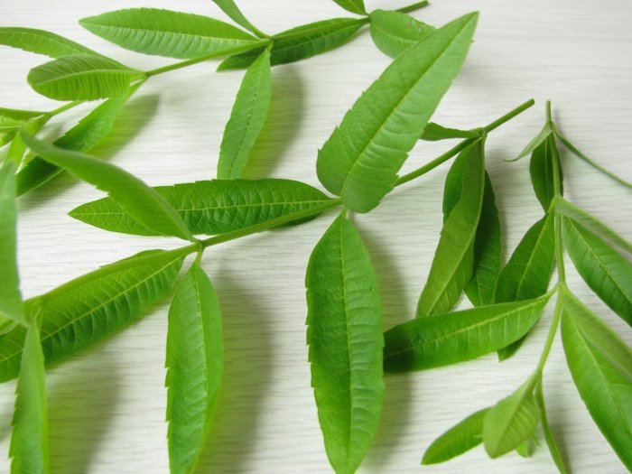 Close-up of lemon verbena leaves on a white wooden table