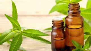 Lemon Verbena Oil: Benefits & Uses
