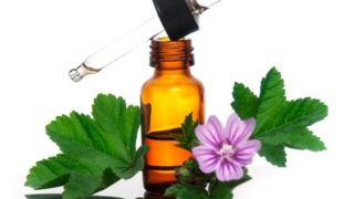 Health Benefits of Malva Sylvestris