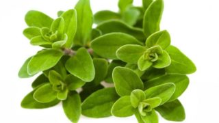 23 Surprising Benefits of Marjoram Essential Oil