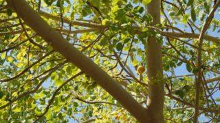 12 Proven Benefits of Marula Oil
