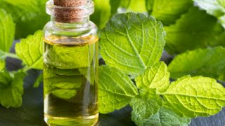 13 Amazing Benefits of Melissa Essential Oil