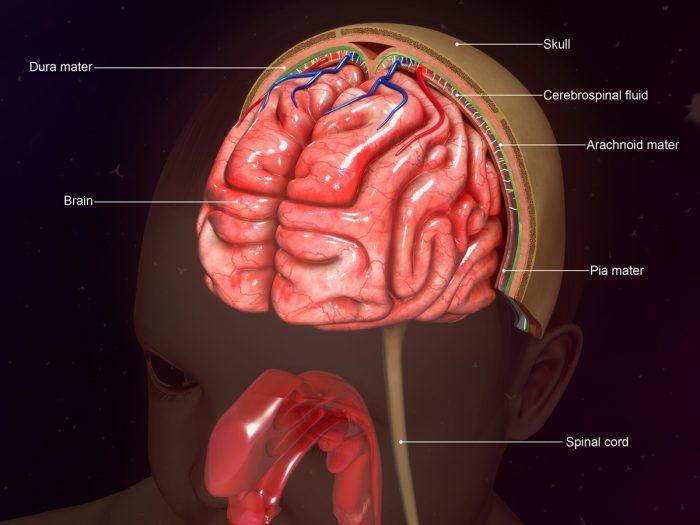9 Surprising Home Remedies for Meningitis | Organic Facts