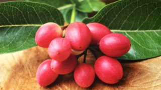 Miracle Fruit: Health Benefits & Uses