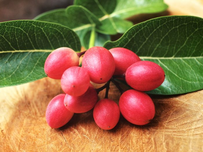 7 Unknown Benefits of Miracle Fruit   Organic Facts