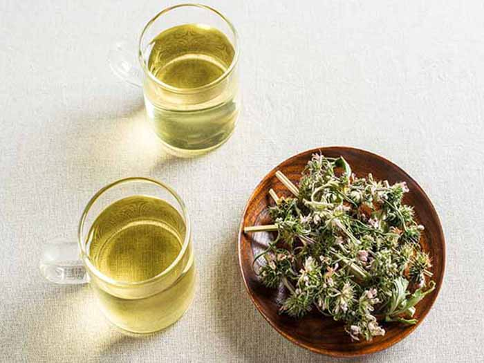 Two cups of motherwort teas kept next to a bowl of dried motherwort herbs on top of a white surface