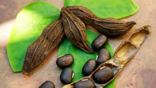 5 Best Benefits of Mucuna Pruriens