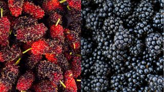Mulberry vs Blackberry: What's the Difference