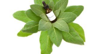 14 Amazing Uses & Benefits of Mullein