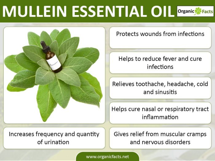 how to make mullein ear oil