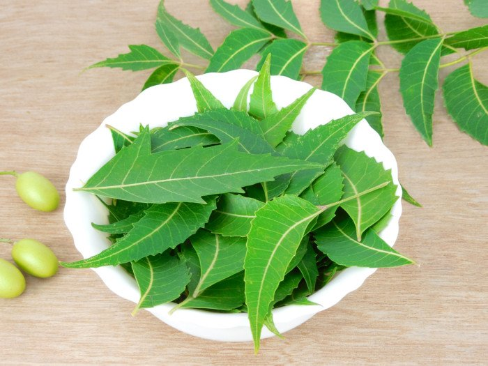 A white bowl filled with neem leaves surrounded by some neem fruits on a wooden table