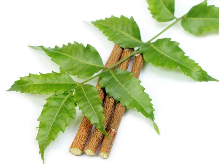 13 impressive benefits of neem organic facts neem