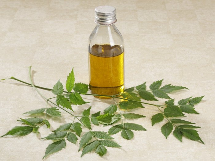 Branches of neem plant with a bottle containing yellow liquid