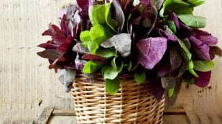 6 Interesting Benefits of Orach