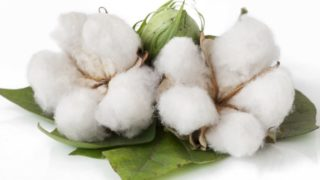 Organic Cotton- Benefits, Uses & Production
