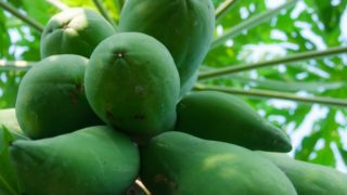Green Papaya (Unripe Papaya): Nutrition & Benefits
