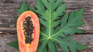 Papaya Leaf: Benefits & How to Use